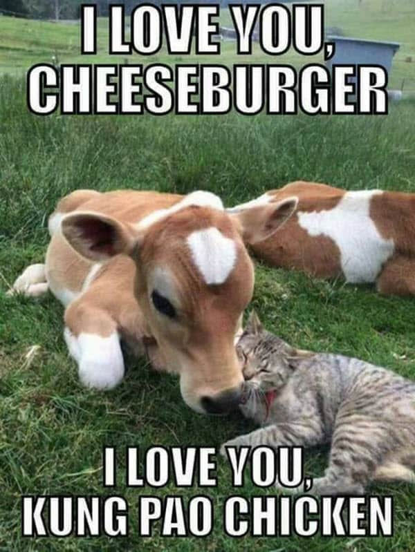 funny i love you cheeseburger meme