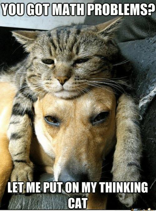 funny math thinking cat memes