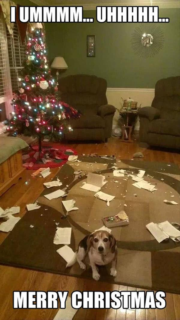 funny merry christmas disaster dog memes