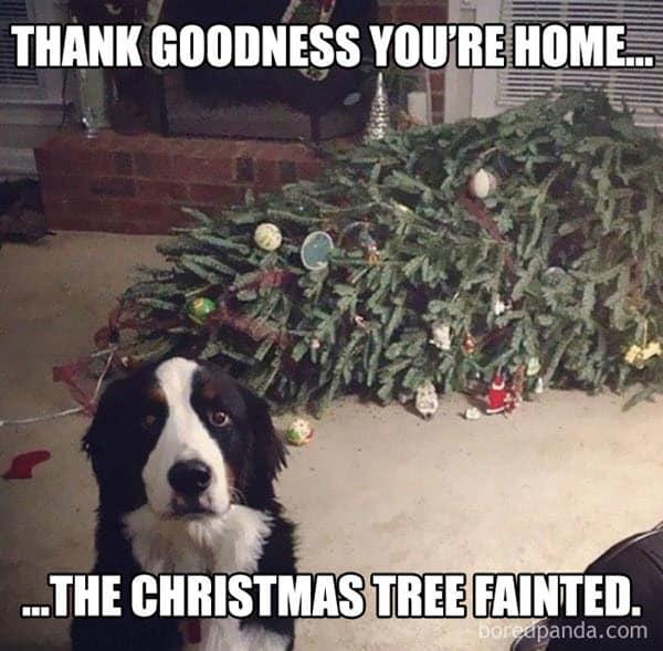 funny merry christmas dog memes