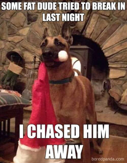 funny merry christmas guard dog memes