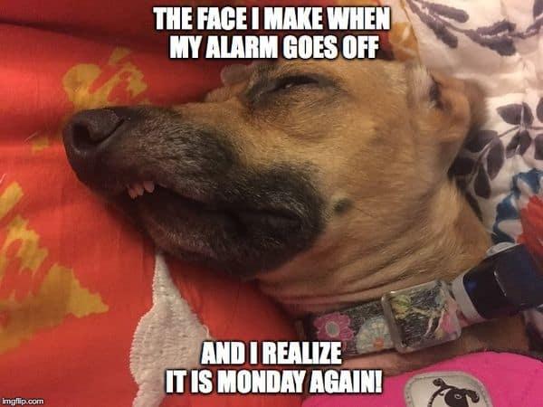 funny monday alarm face meme