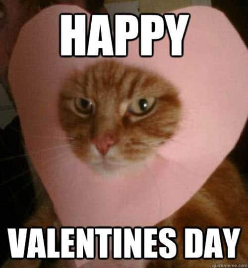 funny valentines heart cat meme