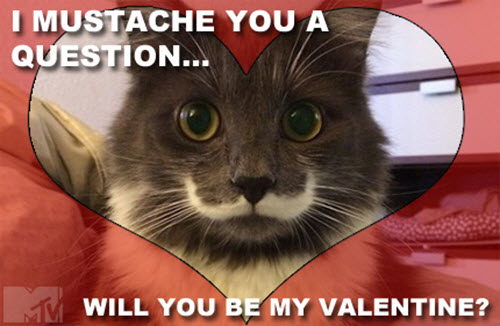 funny valentines i mustache you meme