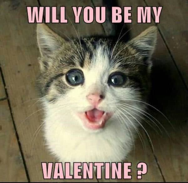 funny valentines will you be meme