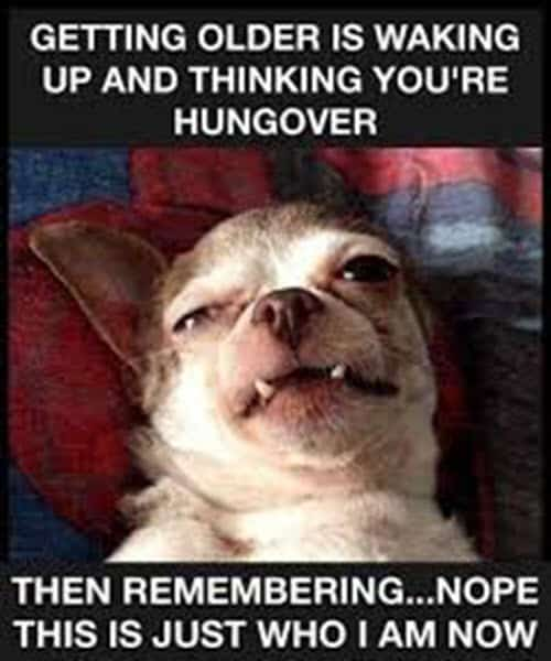 getting old hungover meme