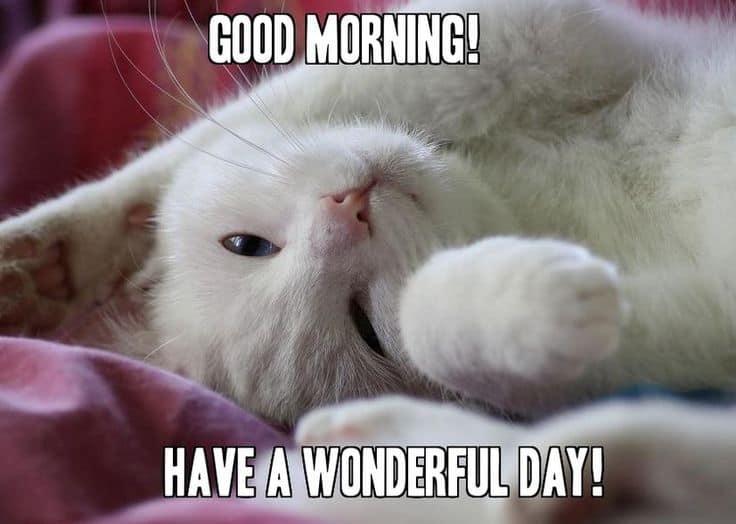 20 Adorable And Cute Good Morning Memes Sayingimagescom
