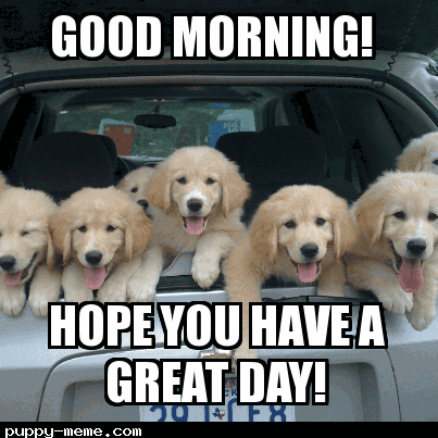 20 Adorable And Cute Good Morning Memes Sayingimagescom