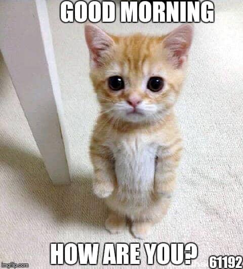 Image result for good morning friend animal meme
