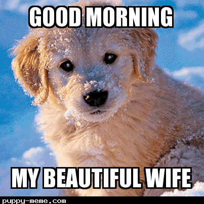 20 Good Morning Memes To Brighten Up Your Day Sayingimagescom