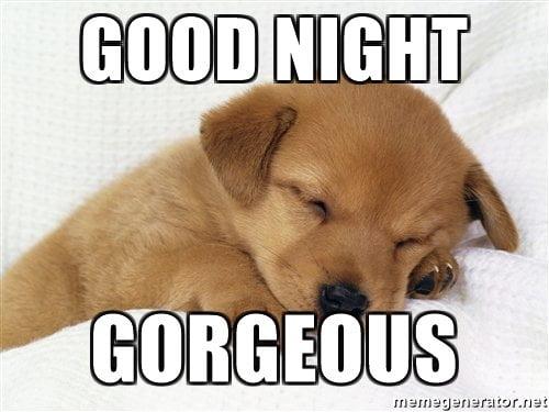 20 Cutest Goodnight Memes Sayingimages Com