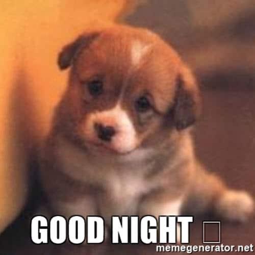 goodnight dog meme