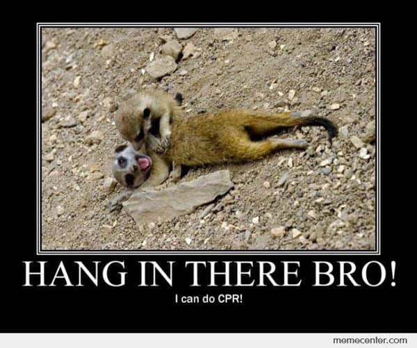 hang in there bro meme