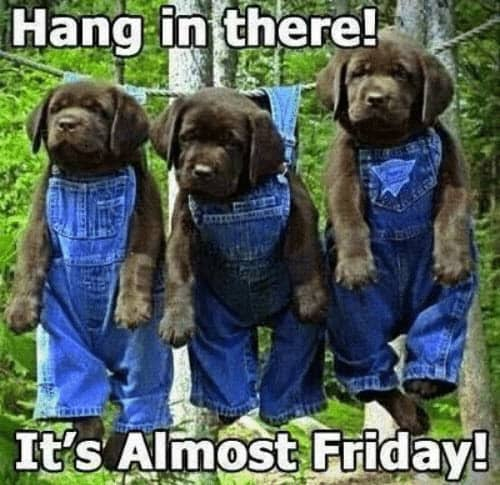 hang in there friday meme