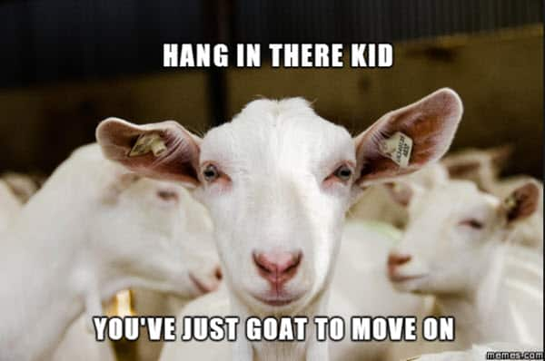 hang in there kid meme
