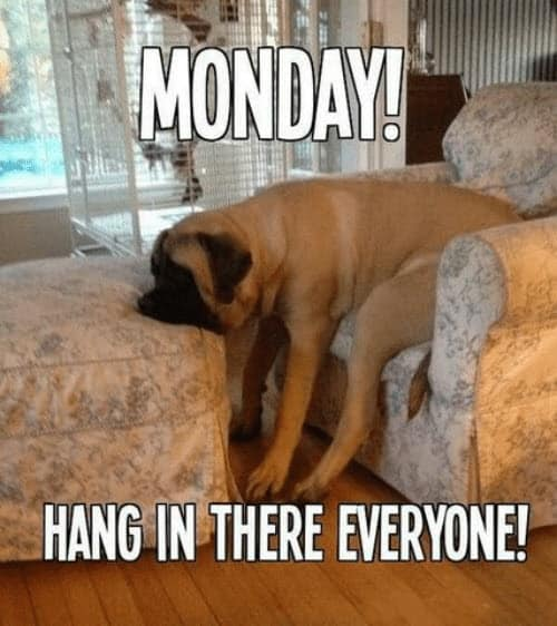 hang in there monday meme