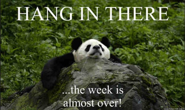 hang in there the week is almost over meme