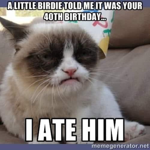 happy 40th birthday grumpy cat meme