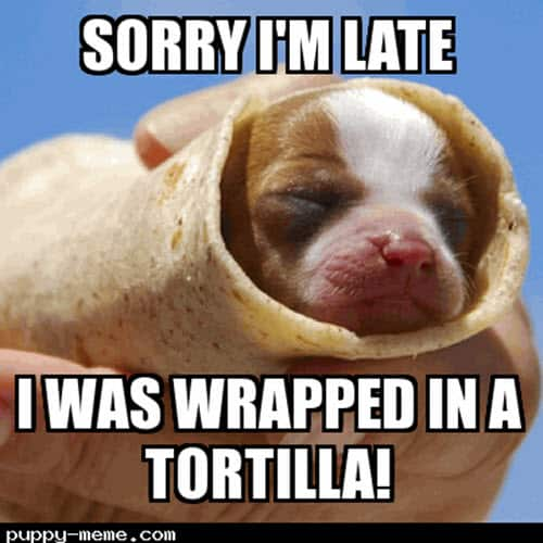 happy belated birthday wrapped in a tortilla meme