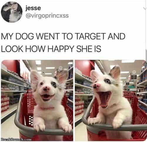 happy dog memes