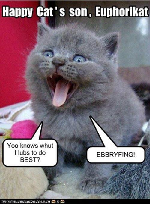 happy euphorikat memes