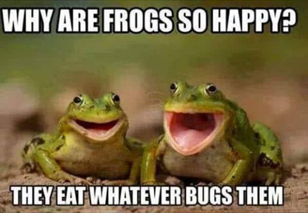happy frogs memes