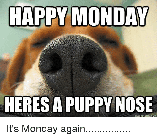 happy monday heres a puppy nose meme 20 best memes to start monday the right way sayingimages com