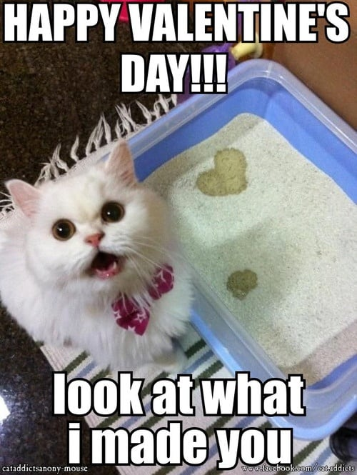 20 Cute and Funny Valentine's Day Memes | SayingImages.com