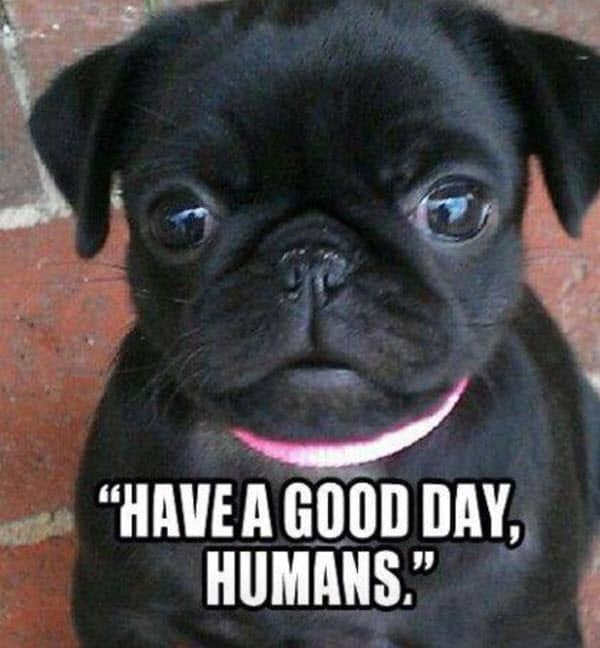 have a good day human meme
