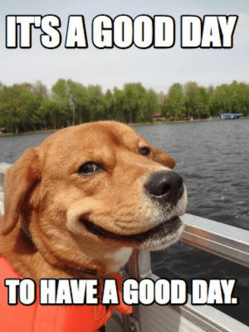 have a good day to have a good day meme