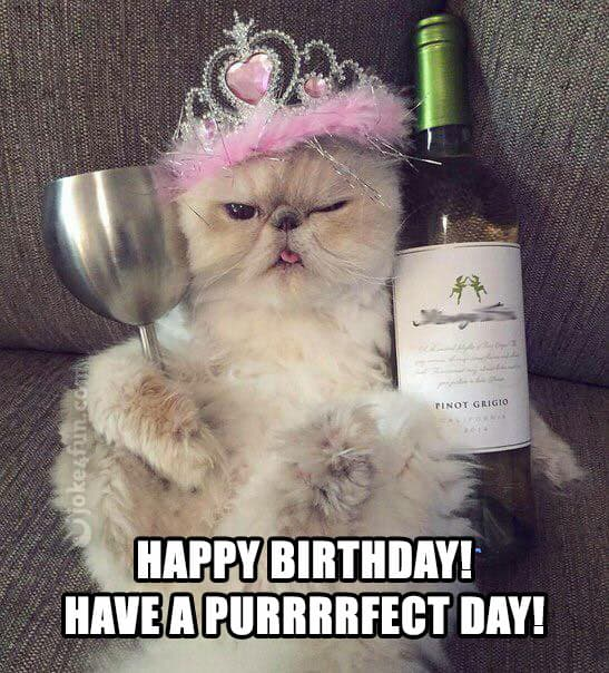 20 Cat Birthday Memes That Are Way Too Adorable