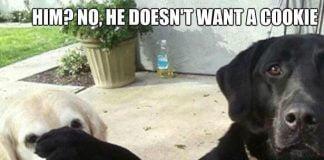 funniest pet meme