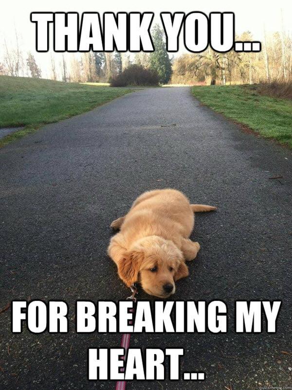 heartbroken thank you meme