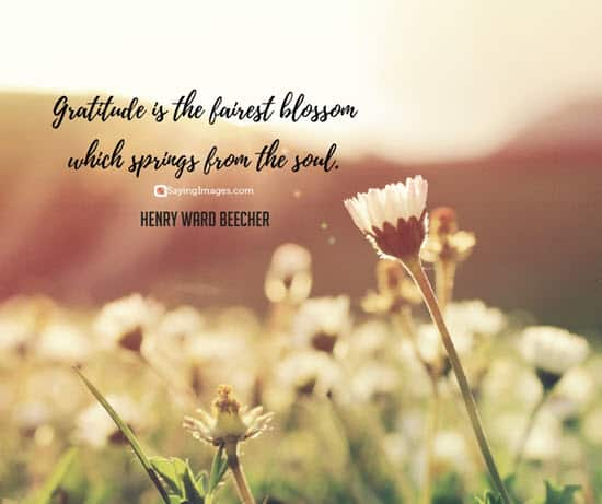 henry ward beecher gratitude quotes