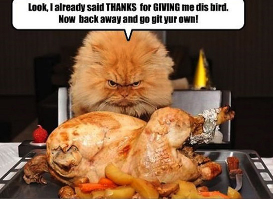 20 Happy Thanksgiving Memes To Help You Celebrate ...