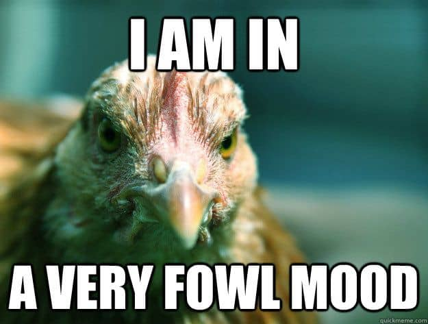 Funny chicken memes - photo#41
