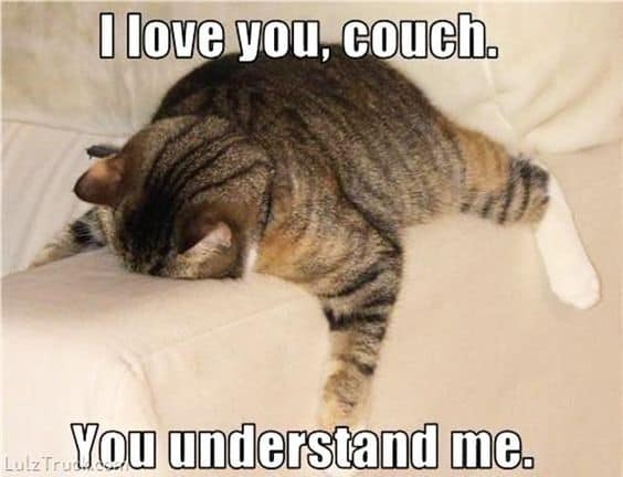 i love you couch you understand me meme 40 funny i love you meme sayingimages com