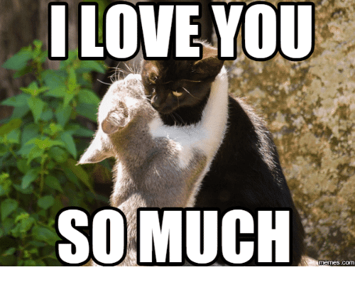 20 Very Sweet And Funny I Love You This Much Memes Sayingimagescom