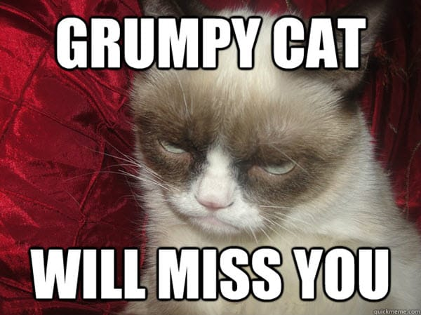 i miss you grumpy cat memes