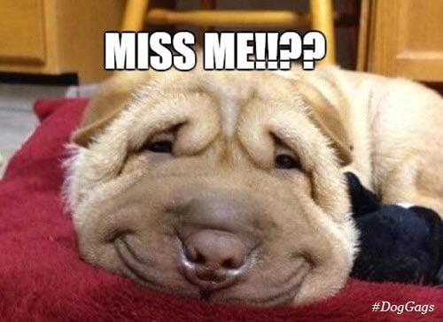 i miss you me memes