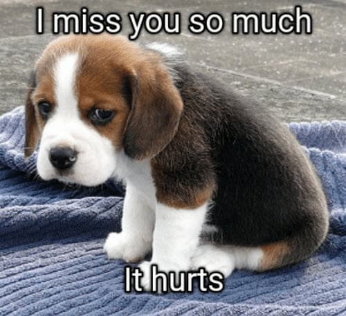i miss you so much it hurts memes