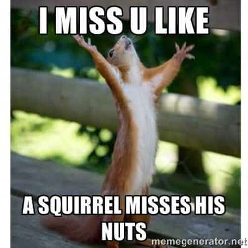 i miss you squirrel memes