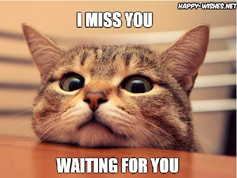 i miss you waiting for you memes 20 cutest i miss you memes of all time sayingimages com