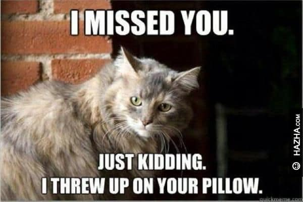 i missed you just kidding i threw up on your pillow miss meme 20 funny i miss you memes for when you miss someone so bad
