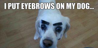 eyebrow meme