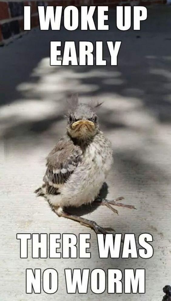 monday funny meme memes week start ready woke early right