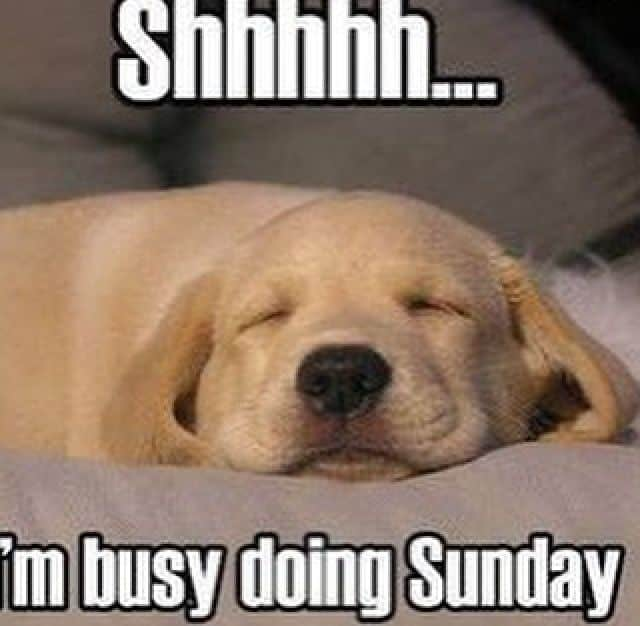 Sunday Funday Quotes: 20 Sunday Memes That'll Complete Your Weekend