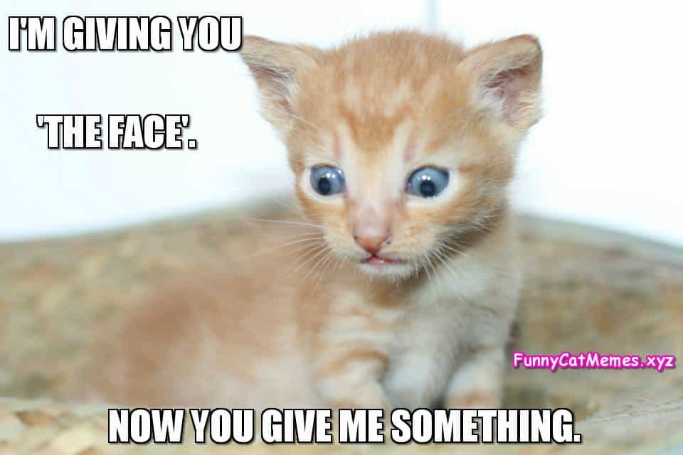 Cutest kitten memes about dating