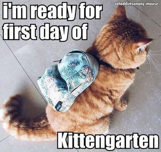 Iu0027m Ready For The First Day Of Kittengarten