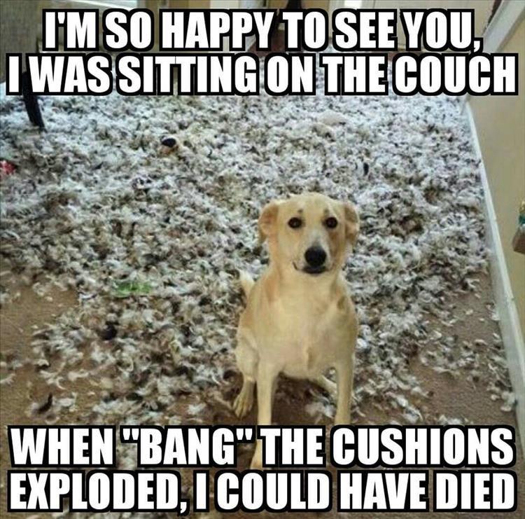 cute animal memes